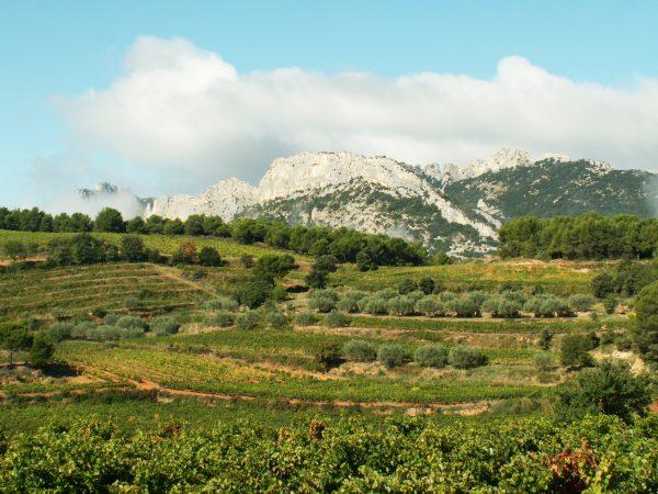 Les vignes du Domaine Les Baies Goûts